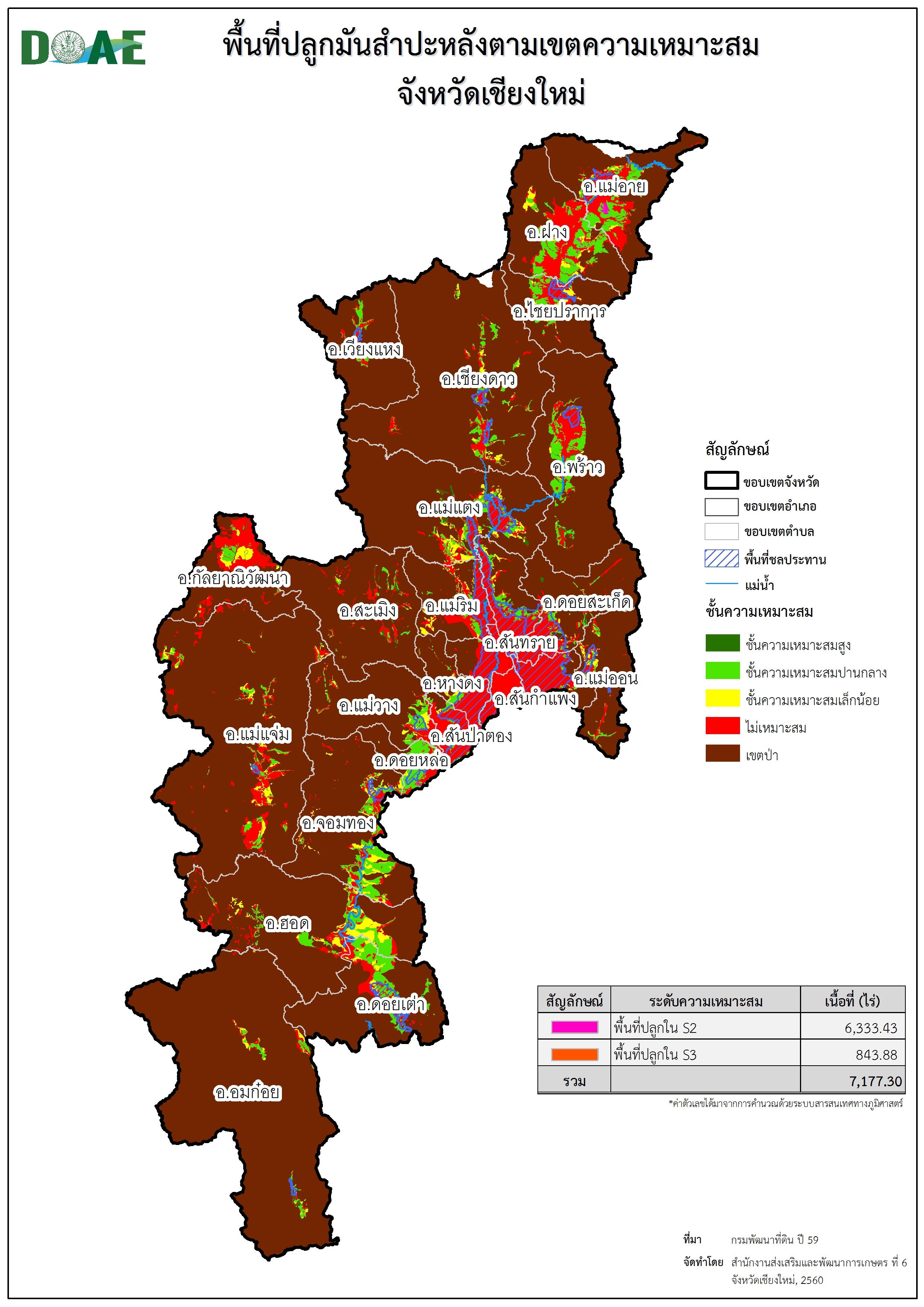 Planting_on_zoning_cassava_chiangmai.jpg